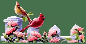 Птицы в загадках для дошколят и школьников
