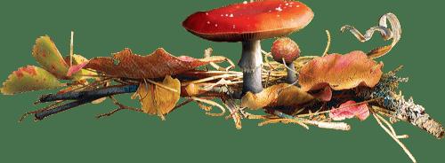 Ходим по лесу с лукошком! - загадки про грибы для детей