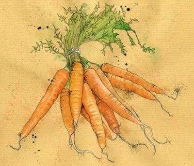 Морковка в стихах для детей, Вкусной выросла морковка…Вся оранжевого цвета…, Выросла у нас морковка…,,Дремлет под землёй морковь…, В грядках красные девицы…,Как у бабушки на грядке…, Косички зеленые ветер качает…,Красный нос в землю врос…, Ловко спряталась девица…, Морковь с достоинством сказала…, От морковки толку больше…,Прячется в земле плутовка…, Что морковь весьма полезна…,Чтобы быстрым быть и ловким…,Я морковка, иль морковь… Очень красная морковка…, стихи про сад, стихи про огород, стихи про дачу, стихи про овощи, стихи про фрукты, стихи про сад для детей, стихи про огород для детей, стихи про дачу для детей, стихи про овощи для детей, стихи про фрукты для детей, детские стихи про огород, детские стихи про огородные растения, прикольные стихи про огород, прикольные стихи про грядки, стихи про овощи для детского сада, стихи про овощи для малышей, стихи про овощи для дошколят, стихи про огород для младшей школы, стихи про огород для младшей школы, стихи про урожай, детские стихи на праздник урожая, веселые стихи на праздник урожая, стихи про овощи на Праздник урожая, стихи про огород на Праздник урожая,