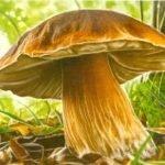 Постучу грибку по шляпке! - стихи про грибы для дошколят и школьников