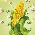 Кукуруза в веселых загадках для детей