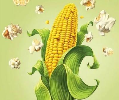 Золотые локоны у зеленой дамы... - загадки про кукурузу для детей
