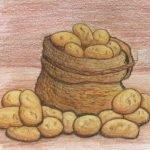 Картофель в веселых загадках для детей