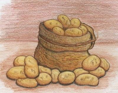 Этот овощ — генерал! - загадки про картошку для детей
