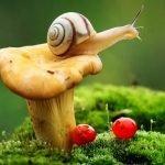 «Путешествие в царство живой природы» экологическая игра (командная)